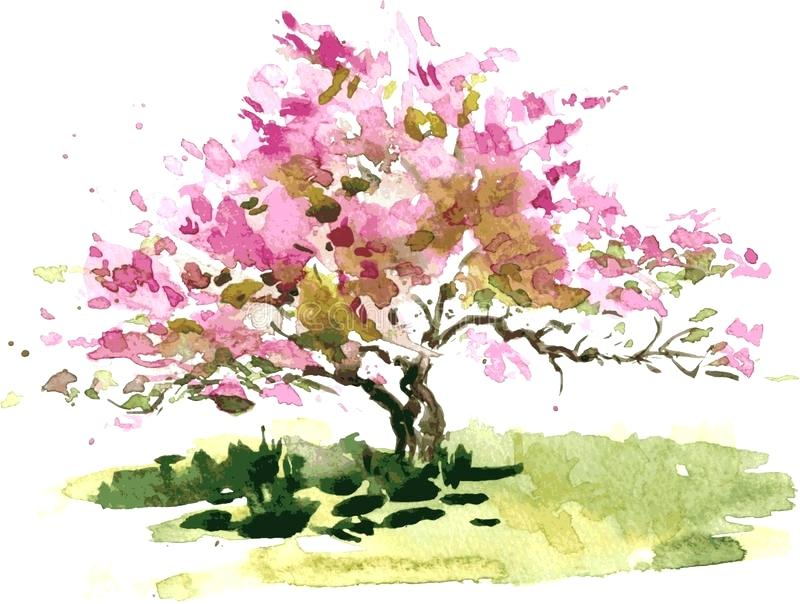 800x604 Cherry Tree Paint Cherry Blossom Watercolor Painting Cherry
