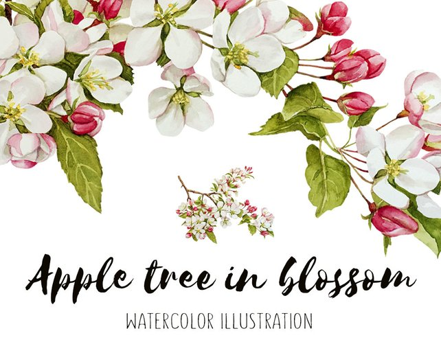 642x514 Apple Tree Apple Blossom Watercolor Blossom Watercolor Etsy