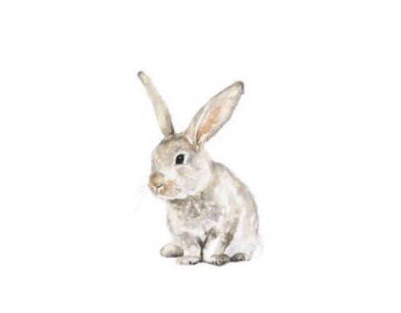570x445 Bunny No 1 Art Print