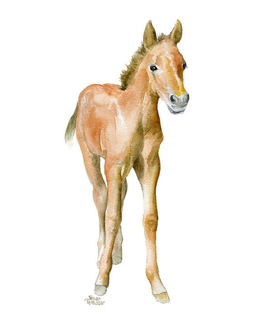 500x625 Horse Watercolor Painting Glicee Reproduction 8 X 10 8.5x11