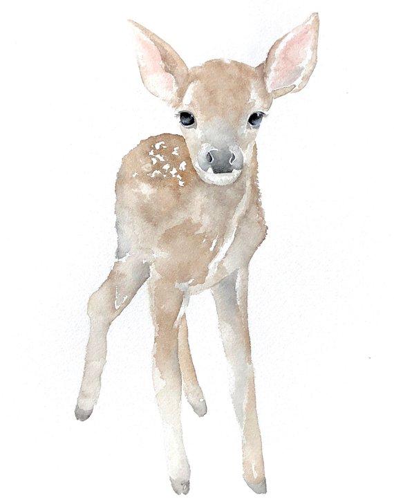 570x726 Watercolor Deer Baby Deer Nursery Art Baby Animals Etsy