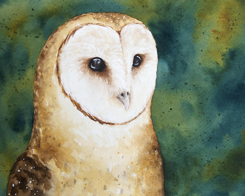 3000x2400 Watercolor Barn Owl Watercolor Owl Standard Art Print Owl Etsy