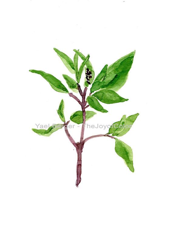 570x806 Basil Art Print, Basil Watercolor Print, Herbs Art, Botanical Art