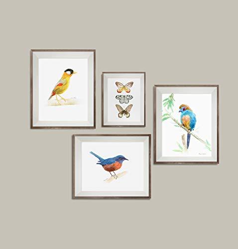 Watercolor Bird Prints