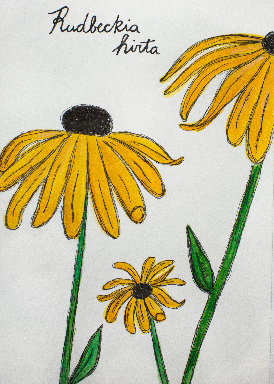 2143x3000 Black Eyed Susan Watercolor Painting Print