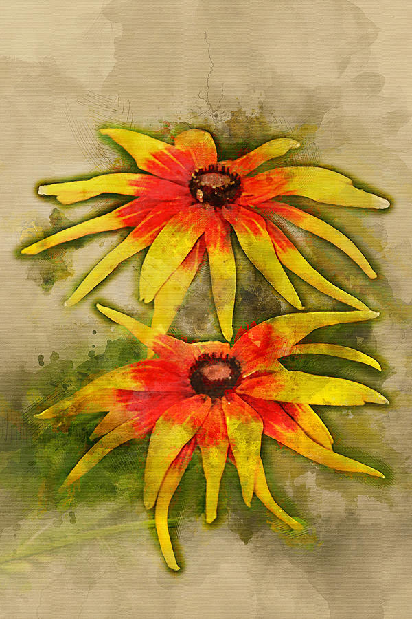 600x900 Black Eyed Susan Watercolor Digital Art By Sgphoto