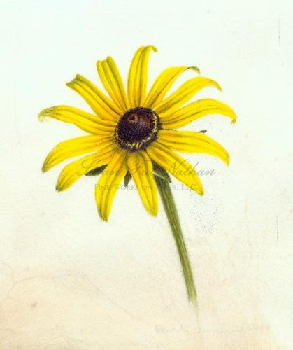 419x500 Contemporary Botanical Art