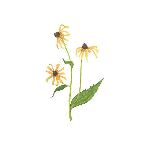 570x570 Watercolor Black Eyed Susan Flowers Original Botanical Etsy