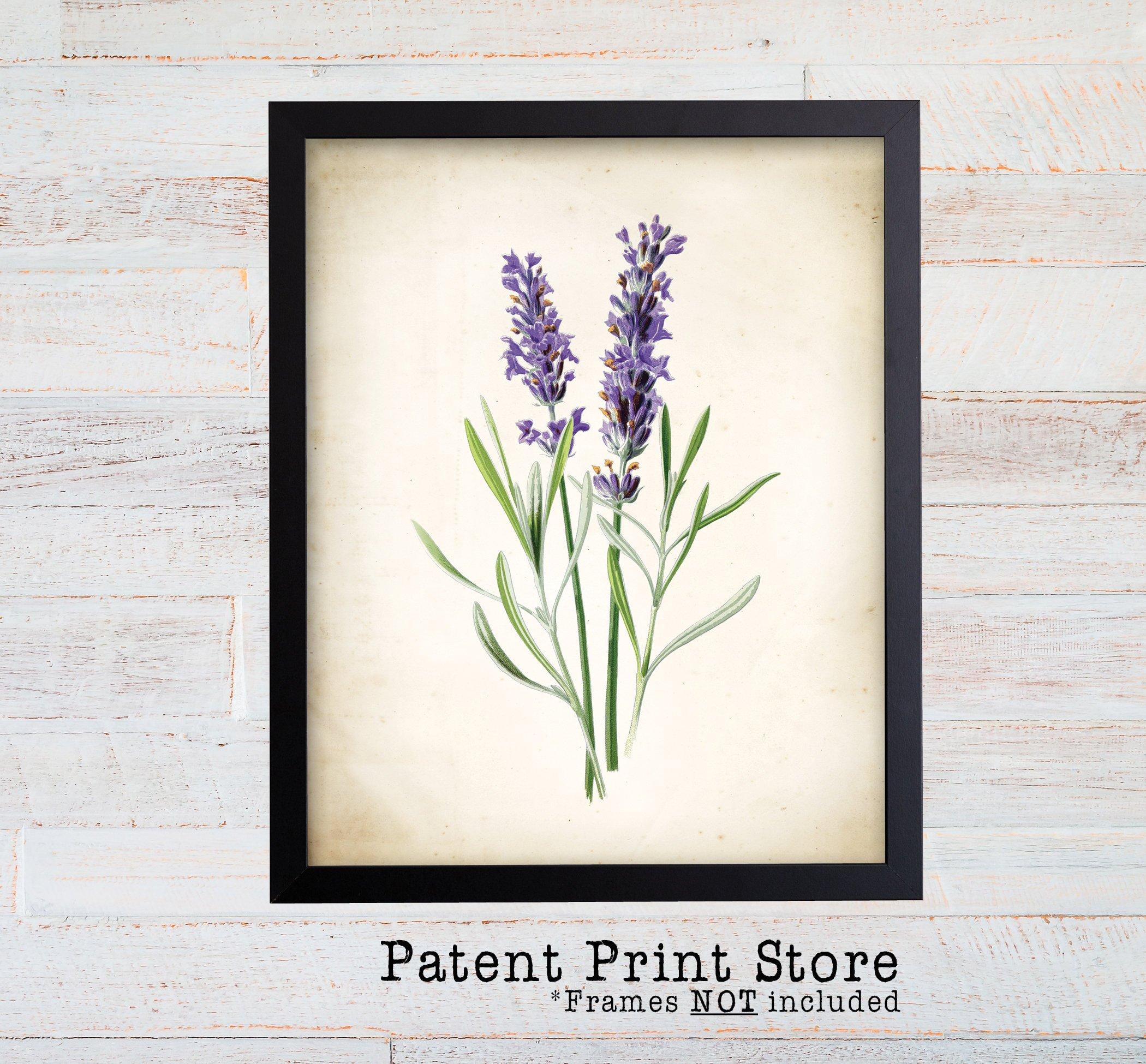 2100x1950 Vintage Watercolor Lavender Print. Botanical Print. Art Print