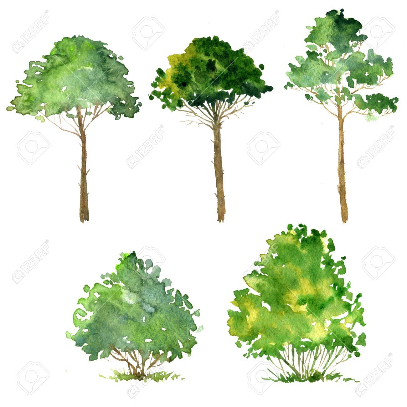1300x1300 Set Of Trees Drawing By Watercolor, Bushes And Pines, Green Green