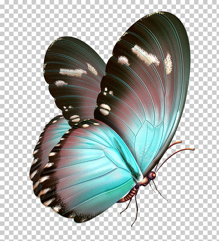 Watercolor Butterfly Png at GetDrawings com | Free for personal use