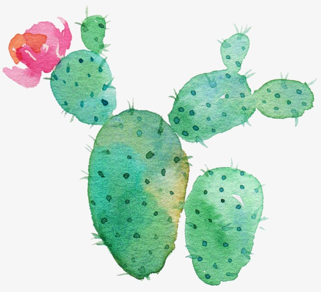 650x591 Green Cactus, Flowering Cactus, Watercolor Green Cactus, Drawing