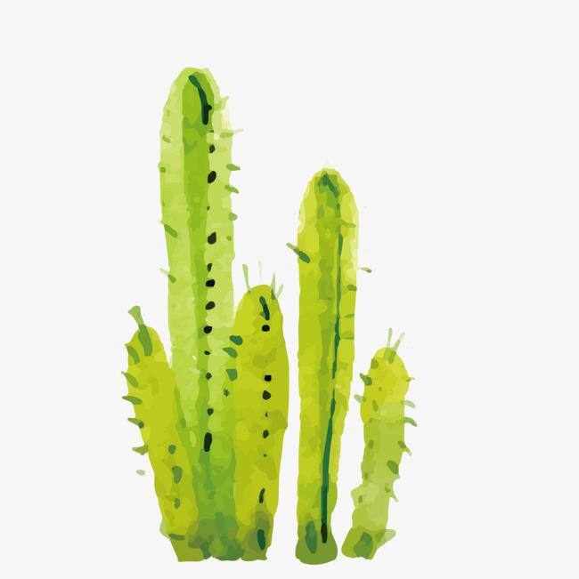 650x651 Green Watercolor Vector Cactus Hand Painted, Green Vector