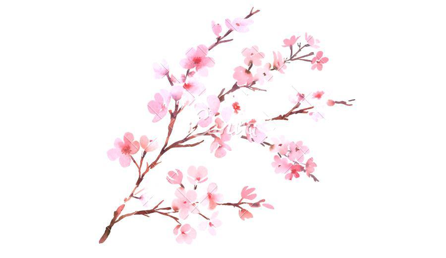 900x520 Cherry Blossom Watercolor Tattoo. Japanese Cherry Blossom