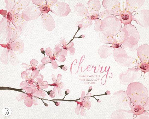 570x456 Watercolor Cherry Blossom Cherry Tree Sakura Hand Painted Etsy