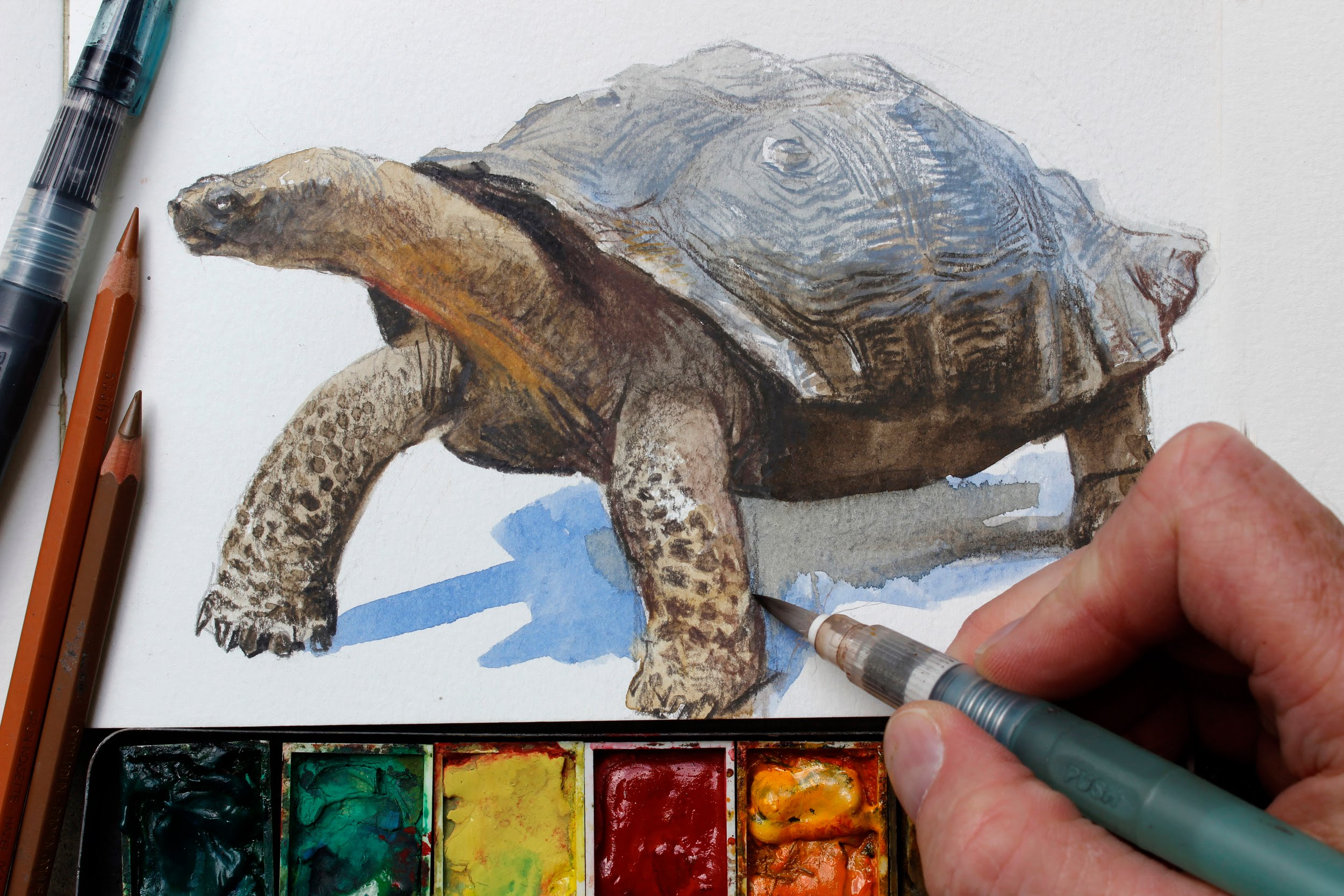 2500x1667 Watercolor + Colored Pencils = Fast, Realistic Textures