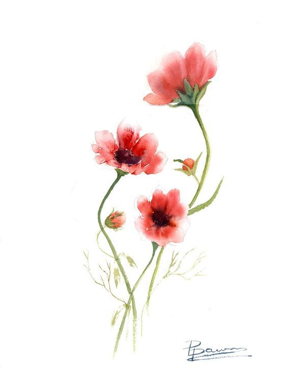 578x735 Original Watercolor Cosmos Painting Original