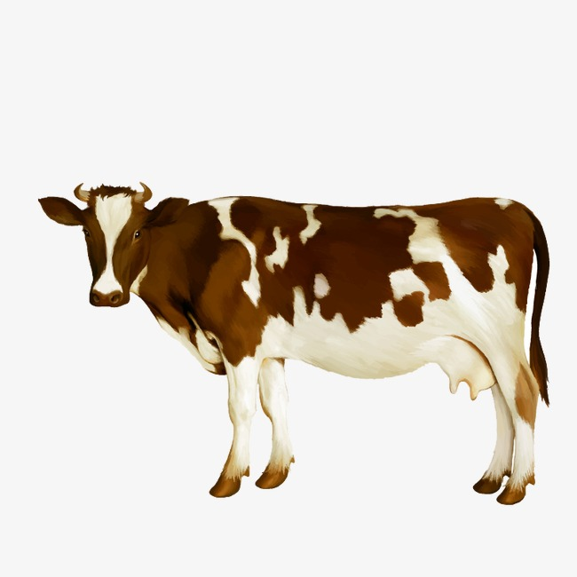650x650 Watercolor Cow Vector, Watercolor, Brown White, Dairy Cow Png And