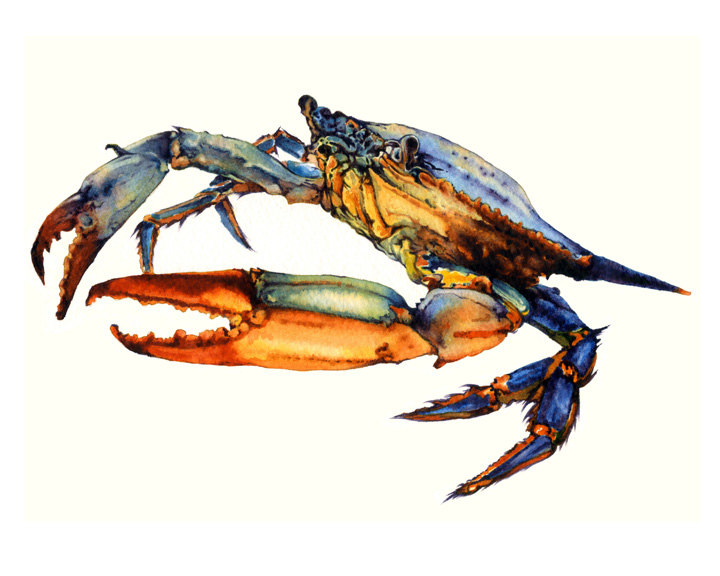 720x576 Crab Art Watercolor Painting Archival Print Atlantic Blue Etsy