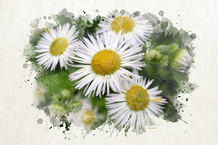 900x600 Daisy Watercolor Art Mixed Media By Christina Rollo