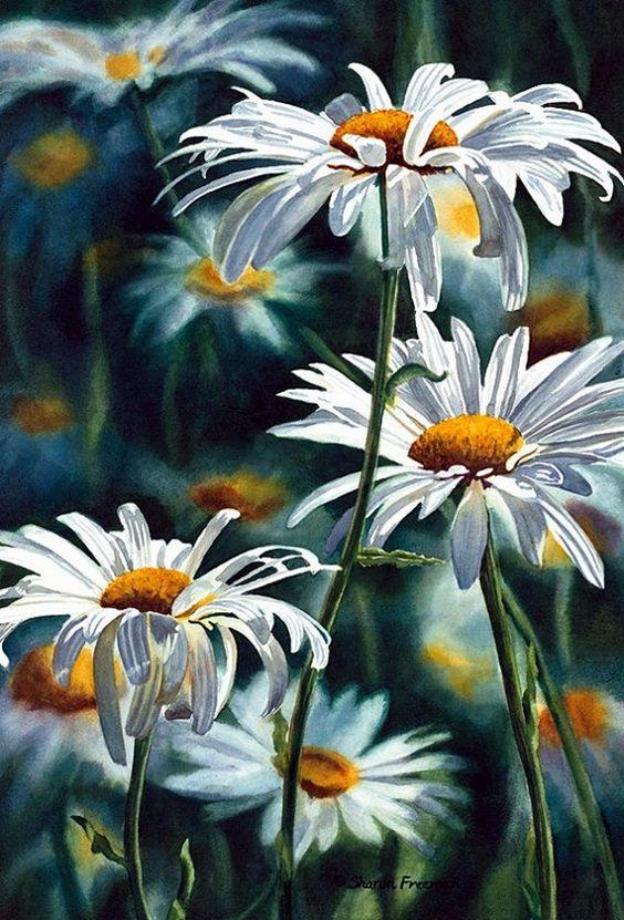 Watercolor Daisy Paintings