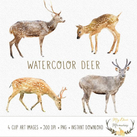 570x570 Deer Clip Art Watercolor Deer Clip Art Roe Clip By Mydearmemories