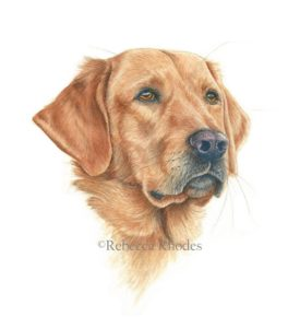264x300 How To Paint A Realistic Retriever Dog In Watercolor