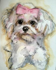 241x300 Dog Art,original Watercolor Painting On Paper,maltese Puppy,pet