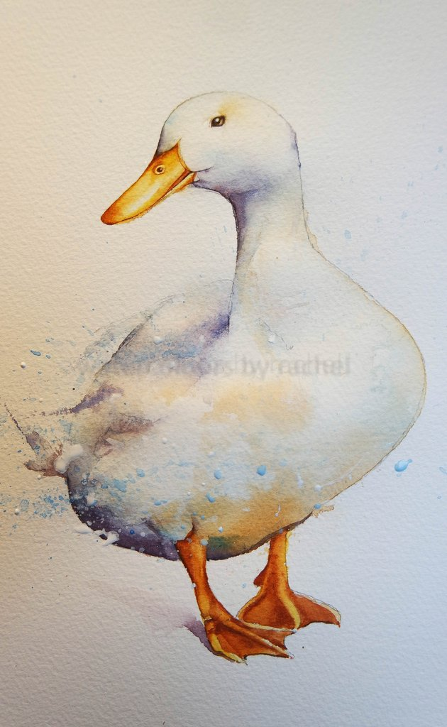 630x1024 How To Paint A White Duck On White Paper. Watercolours By Rachel