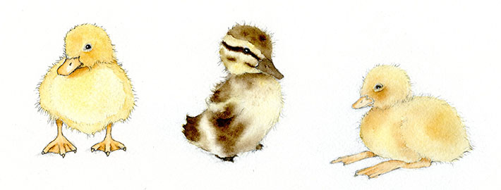 710x270 Adorable Art Learn How To Draw And Paint A Duckling