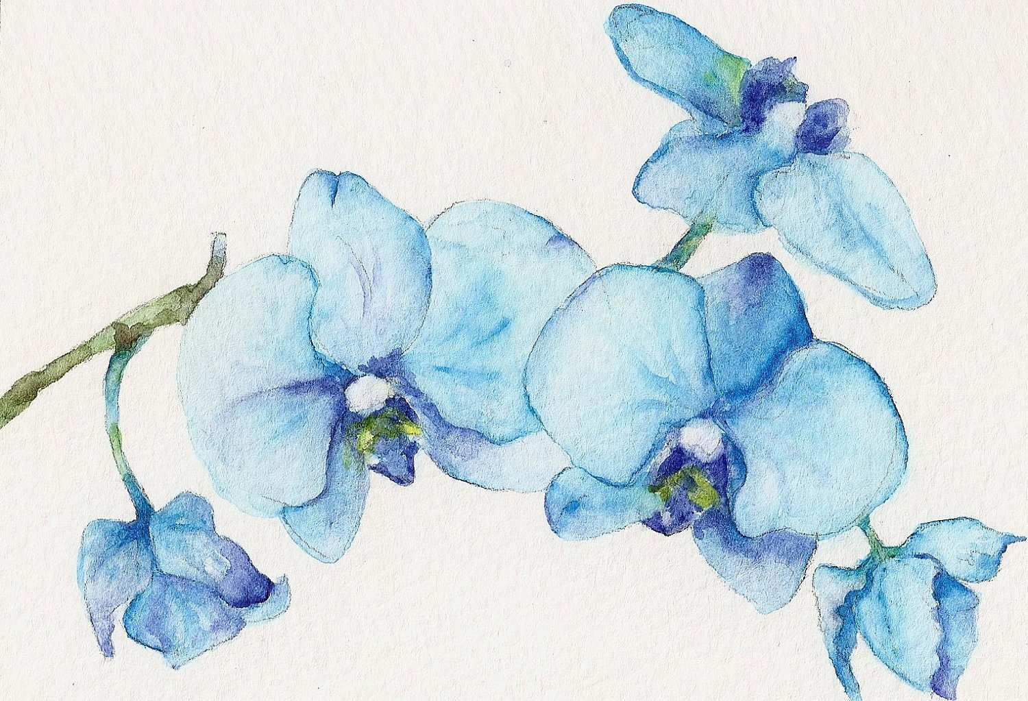 The Best Free Flower Painting Watercolor Images Download From 24748