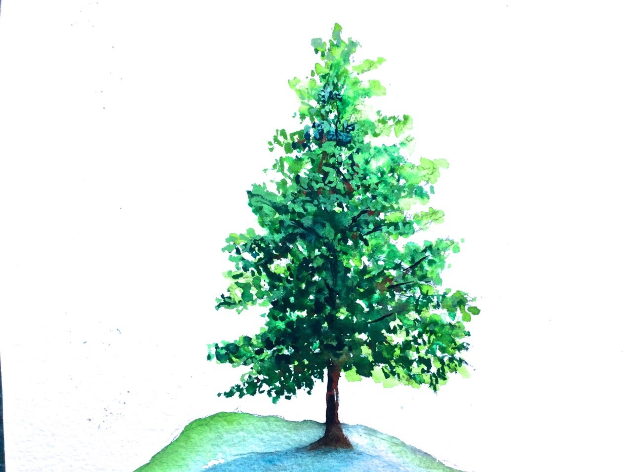 1280x956 Pine Tree Watercolor Tutorial For Beginners, How To Paint Step By