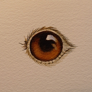 300x300 Painting Eyes Step By Step Watercolor