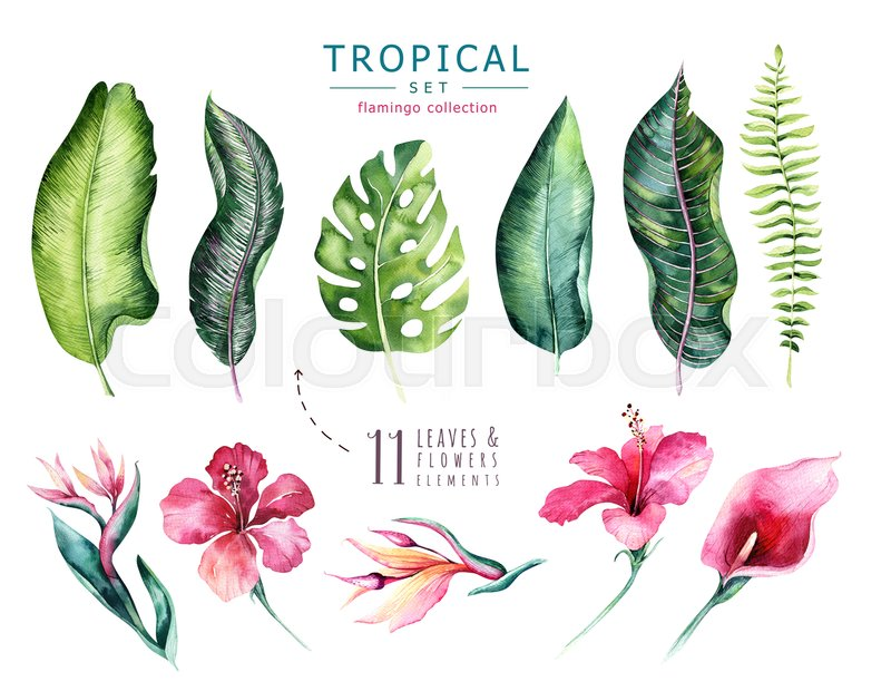 800x620 Hand Drawn Watercolor Tropical Plants Set . Exotic Palm Leaves