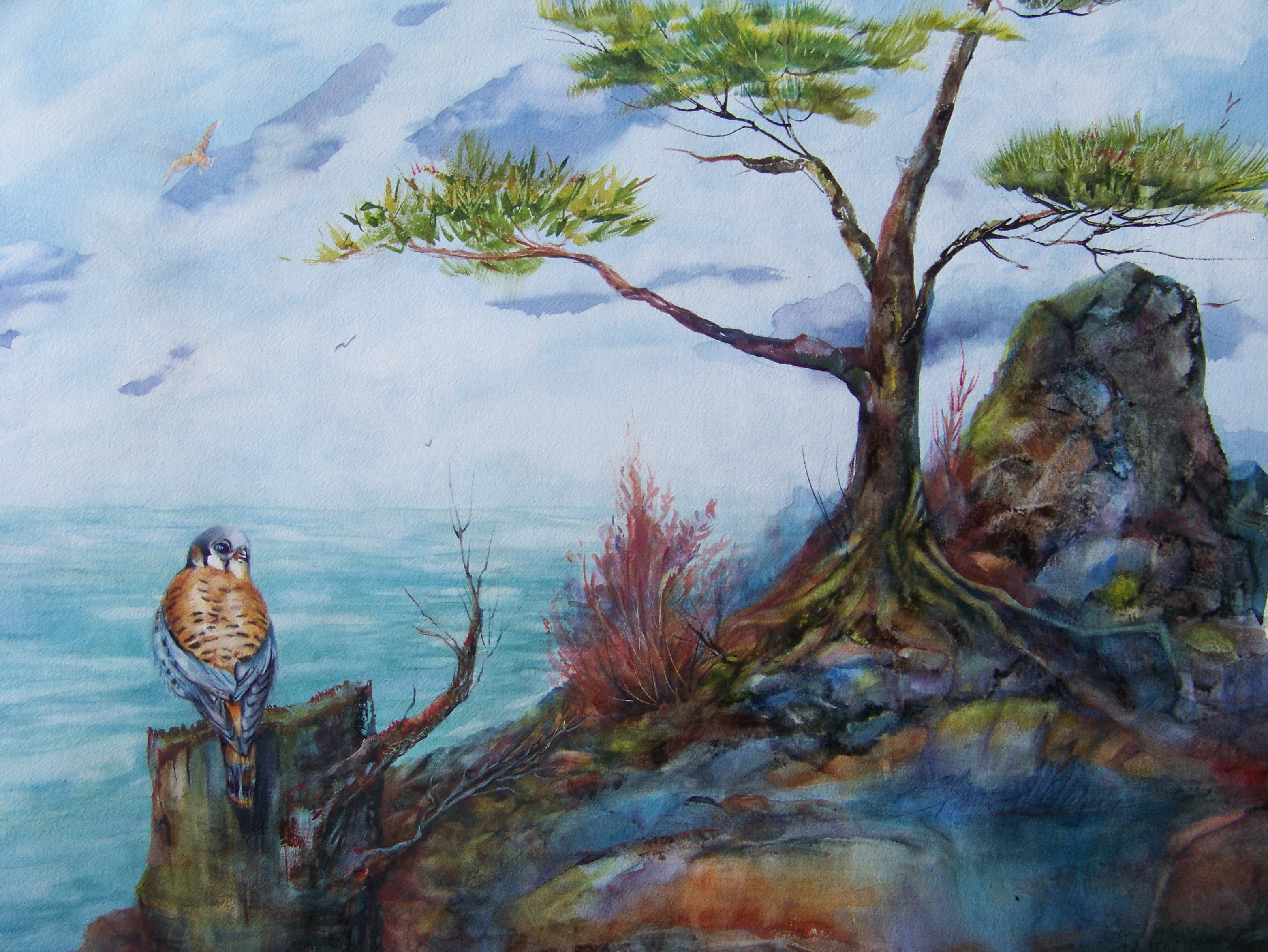 3129x2349 American Kestral ( A Watercolor 15 By 22 Inches) A Painting A Day