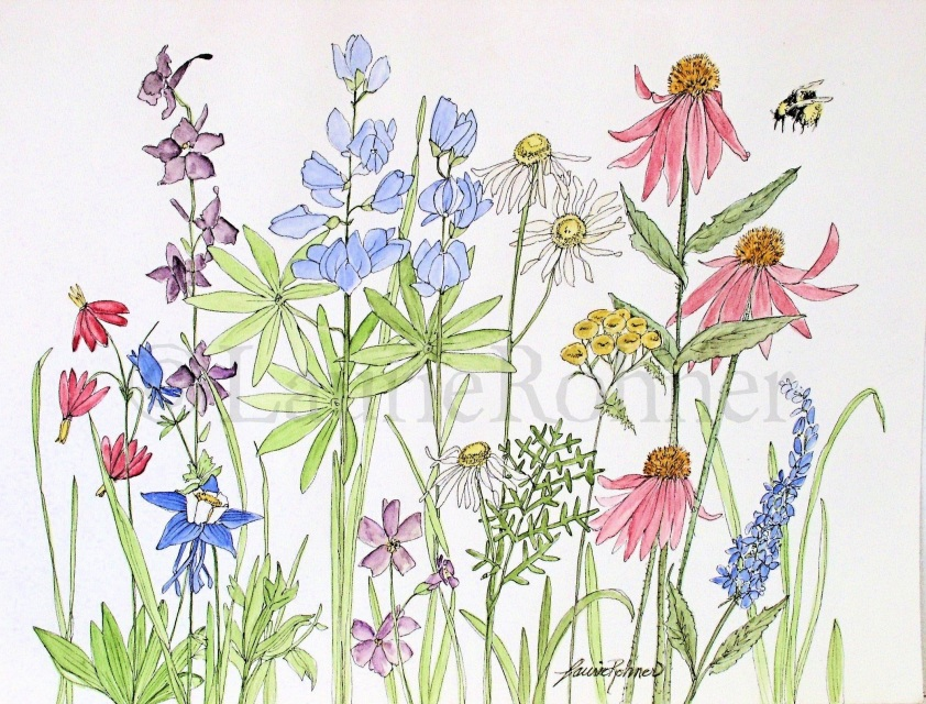 842x640 Watercolor Garden Flowers Wildflowers Garden Nature Illustration
