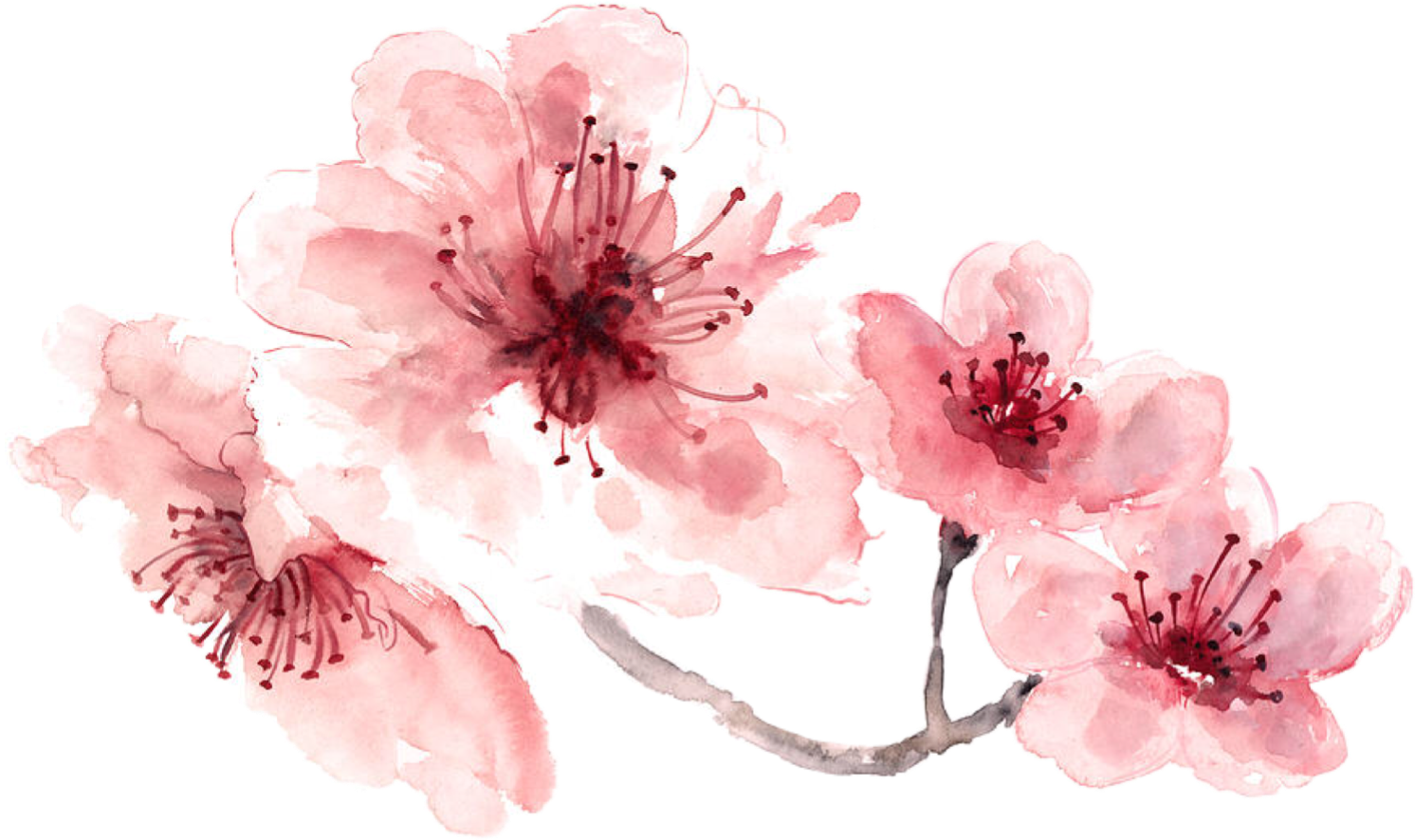 Watercolor Flowers Pink at GetDrawings | Free download