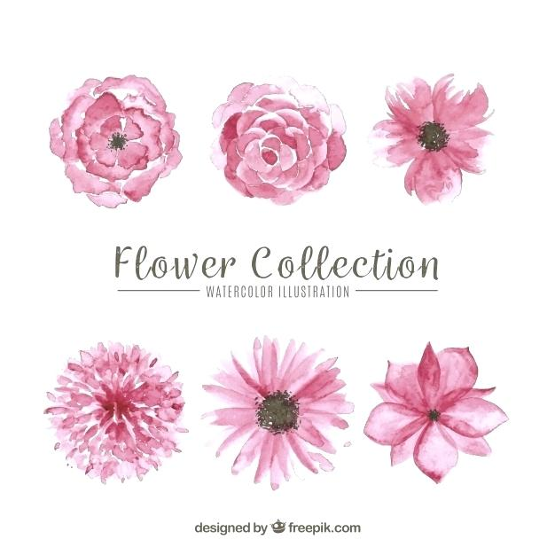 626x626 Pink Flowers Set Of Pink Flowers Free Vector Pink Watercolor