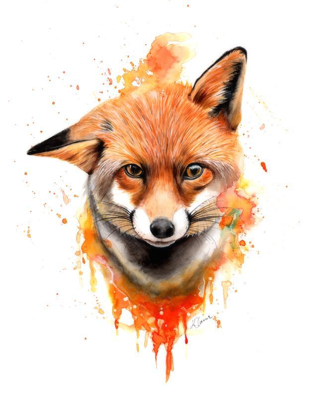 640x800 Fox, Watercolour Amp Pencil, 16x12 Art