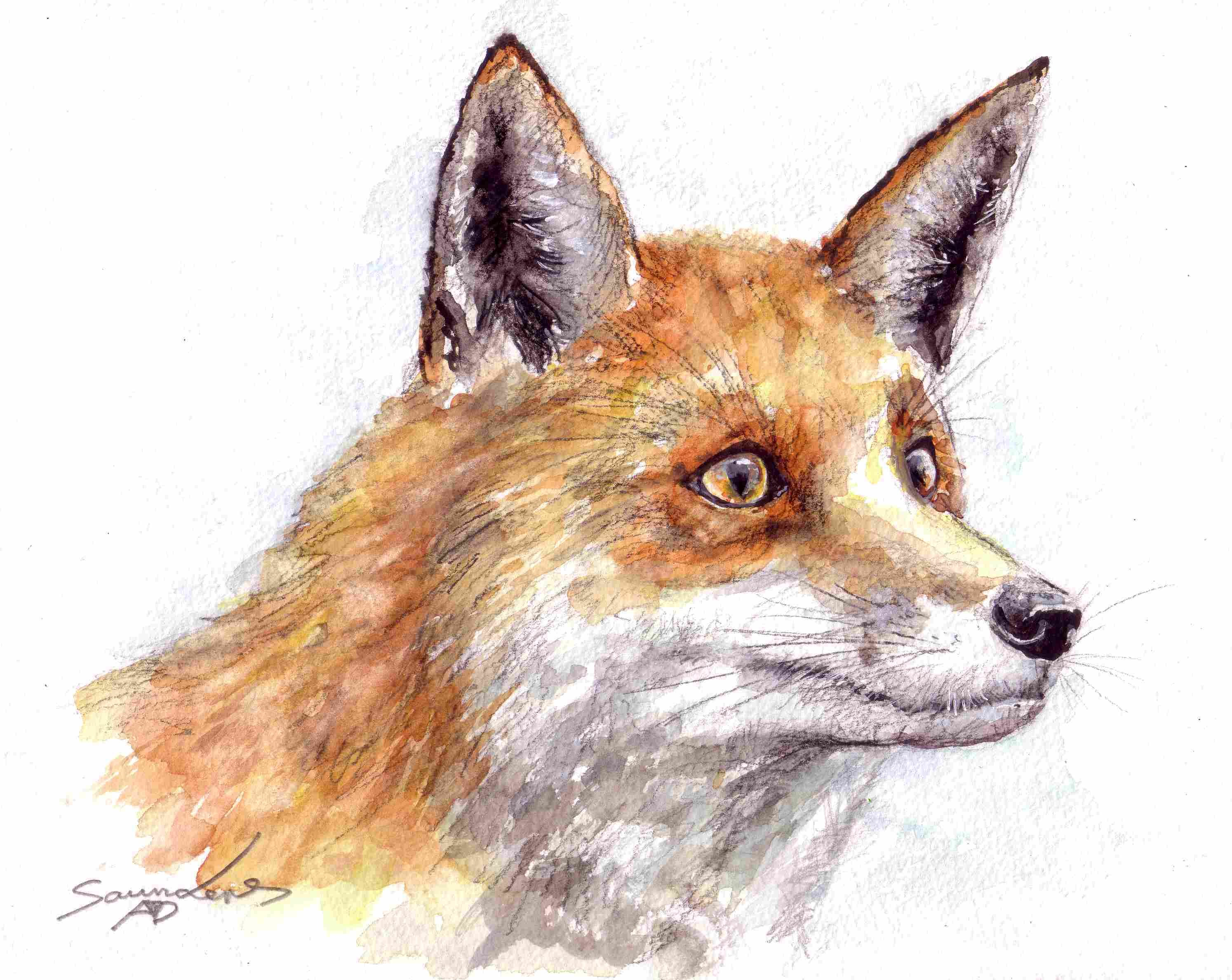 2988x2376 Fox Time Lapse Watercolour Painting