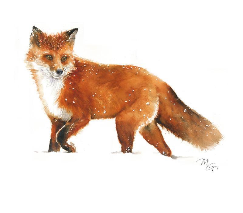 800x700 Fox Walking On Snow Archival Print By Mira Guerquin Mira