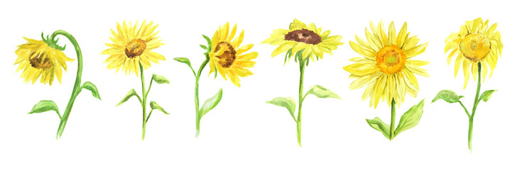 745x240 Sunflower Watercolor Photos, Royalty Free Images, Graphics