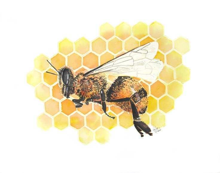 Watercolor Honey Bee