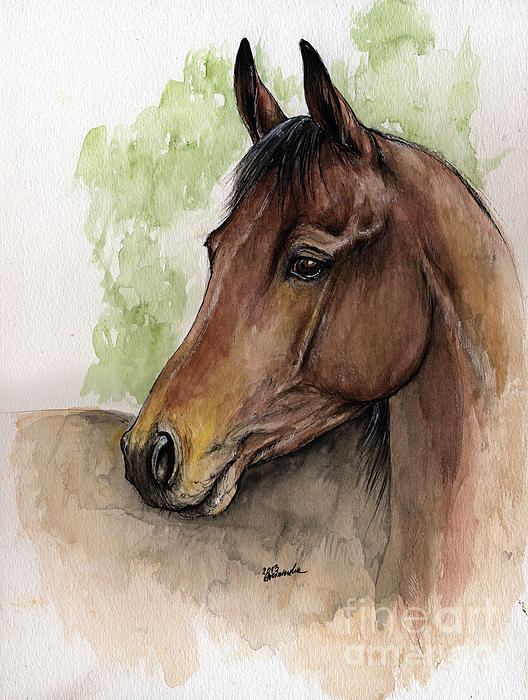 528x700 Bay Horse Portrait Watercolor Painting 02 2013 A Shower Curtain