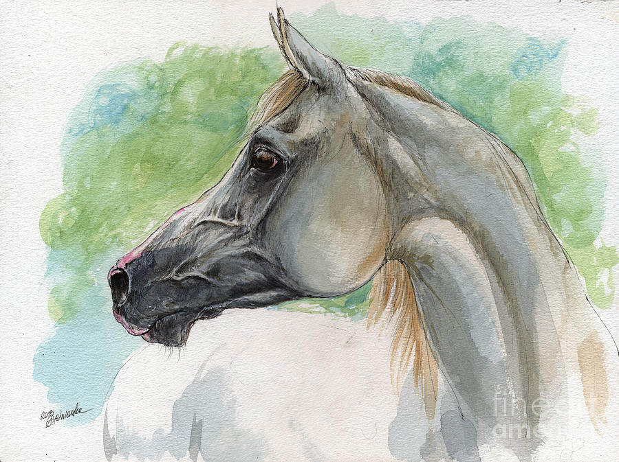 900x673 Grey Arabian Horse Watercolor Painting 27 02 2013 Painting By