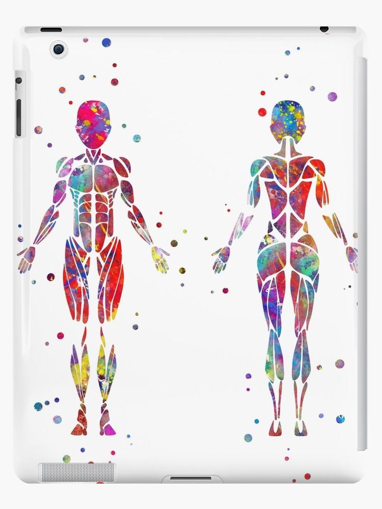 Watercolor Human Body at GetDrawings com | Free for personal