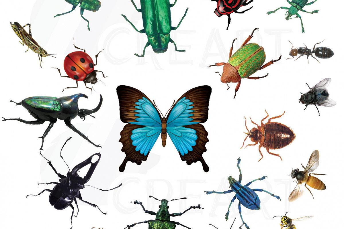 1200x800 Watercolor Insects And Bugs Clipart Pack, Vectors For Commercial