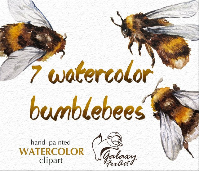 642x551 Bumble Bees Clipart Watercolor Bumblebee Insects Png Diy Etsy