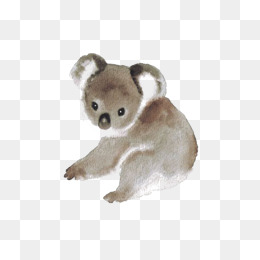 260x260 Hand Painted Koala Png Images Vectors And Psd Files Free