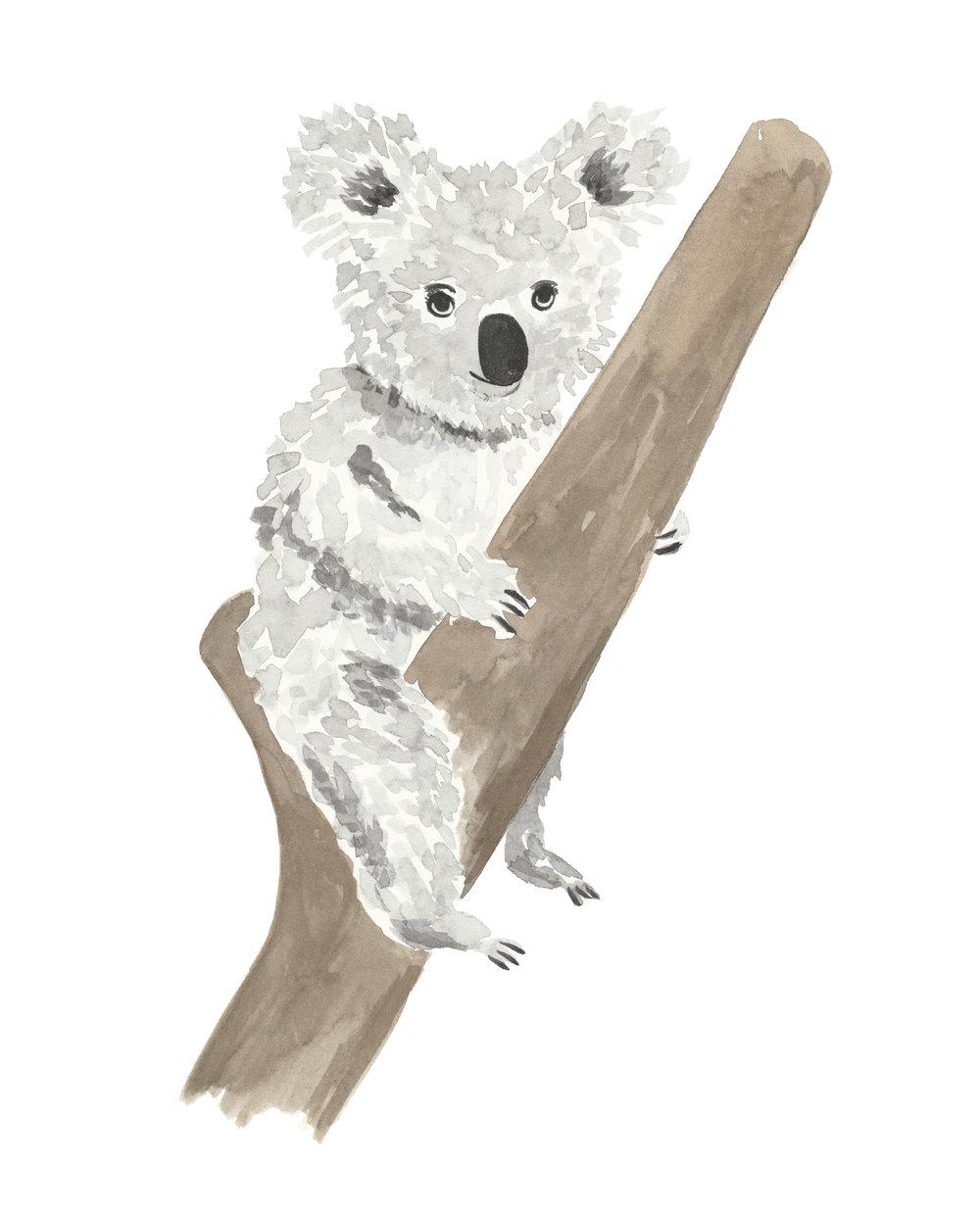 1000x1242 Koala